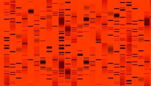 genetic markers in red dye